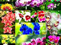 Orchids puzzle