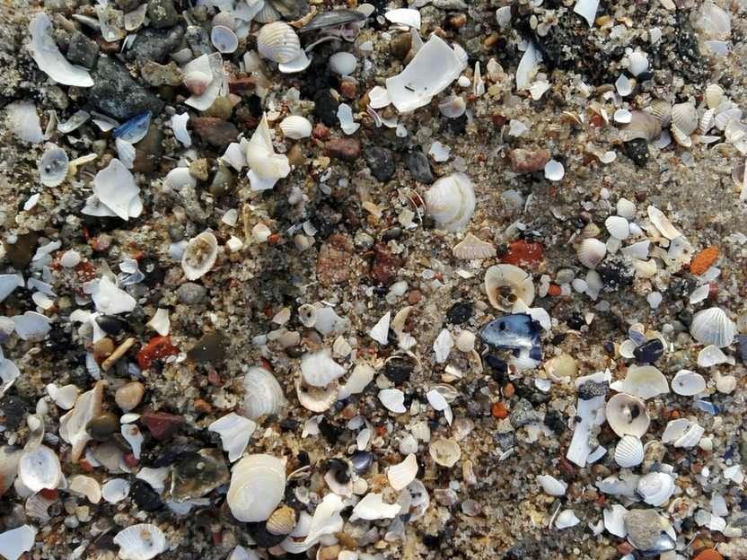 Sand vid havet