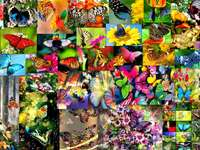 fabulous butterflies