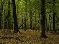 Dąbrowa forest