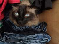 Cotton in the closet