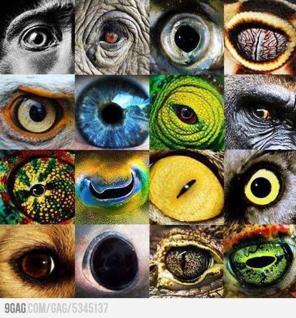Puzzle Oeil de Créature Cercle