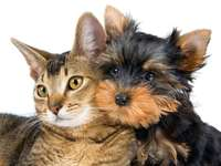 cat and dog 2