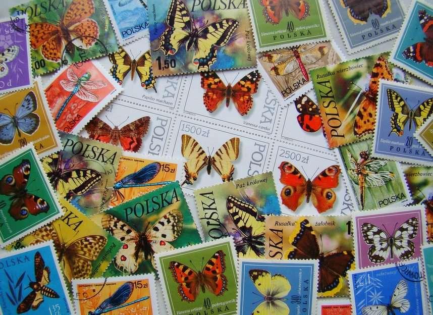 Schmetterlinge auf Polnisch