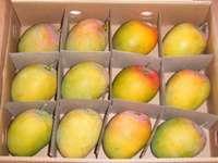 mango mango mango