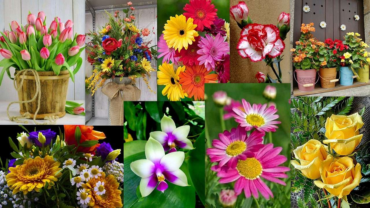 Floral Mix - A floral collage ... a feast for the eye and soul :) (19×11)