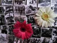 Memories of the uprising