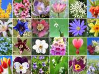 Kwiatki collage