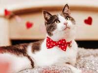 Valentine's Day WH