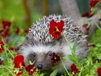 Hedgehog in flowers