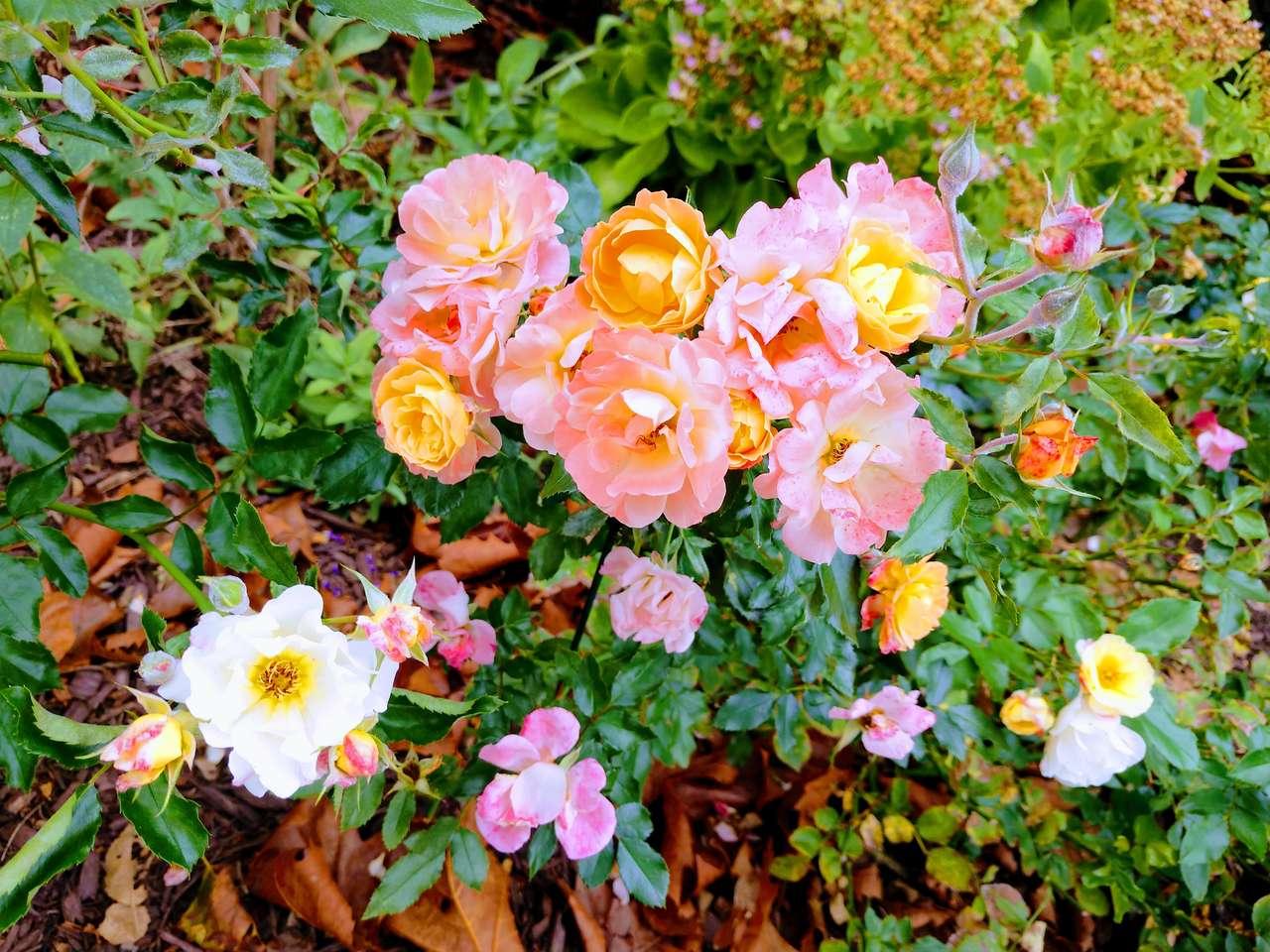 fiori di rosa - carina con fiori rosa (18×14)