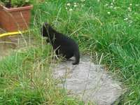 kitten on a stone