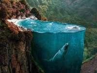 흰 고래 작은 고래 우리 는 모두 고래 다