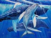 velryby ve vodě