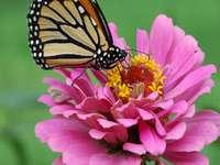butter fly on flower
