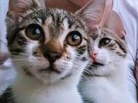 De kittenzusjes