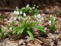 Λουλούδια υπό προστασία