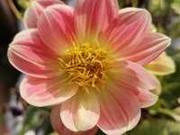 Λουλούδια86