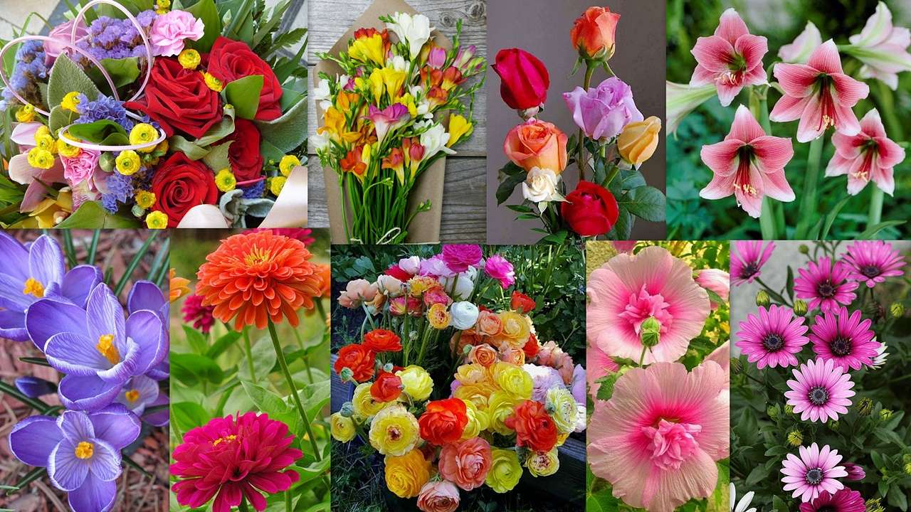Květinový směs