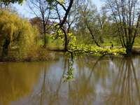 Rybník v Łańcut. puzzle