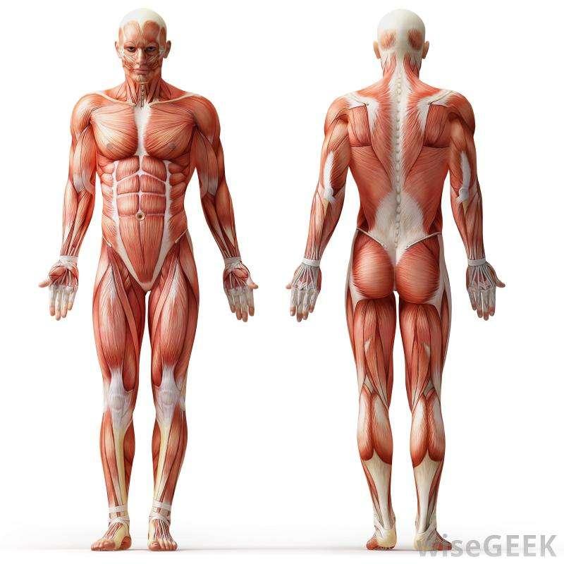 Anatomy Dummy puzzle