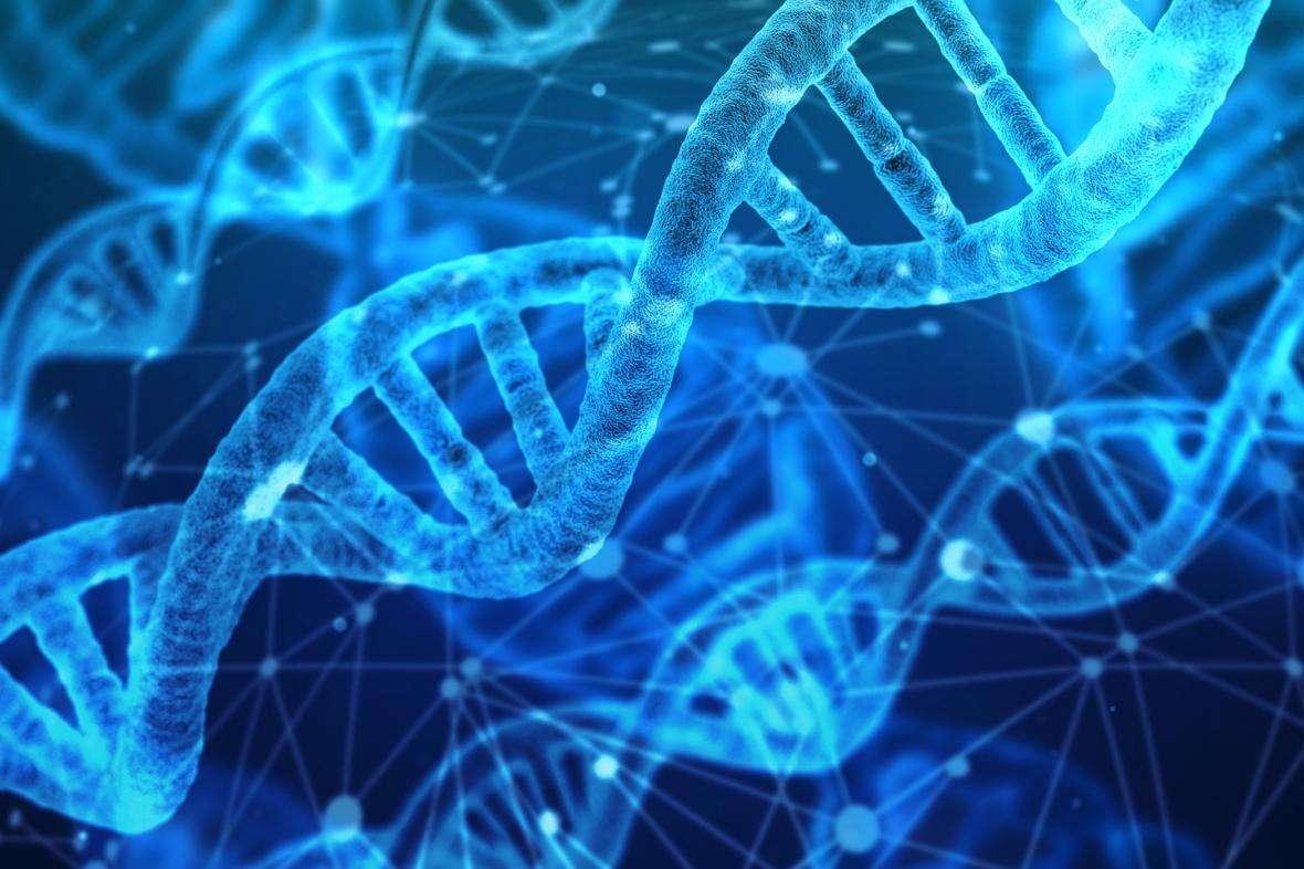 Genetyka