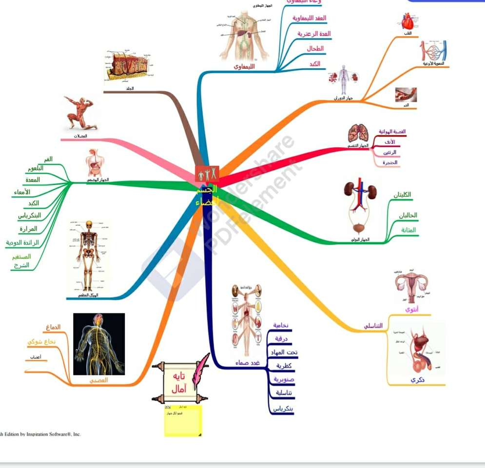 خريطة اعضاء الجسم.