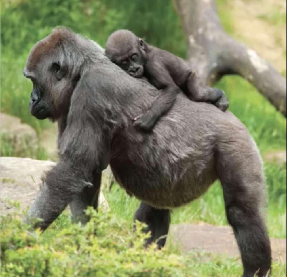 Μαϊμού και μωρό