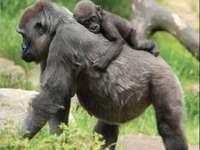 Scimmia e bambino
