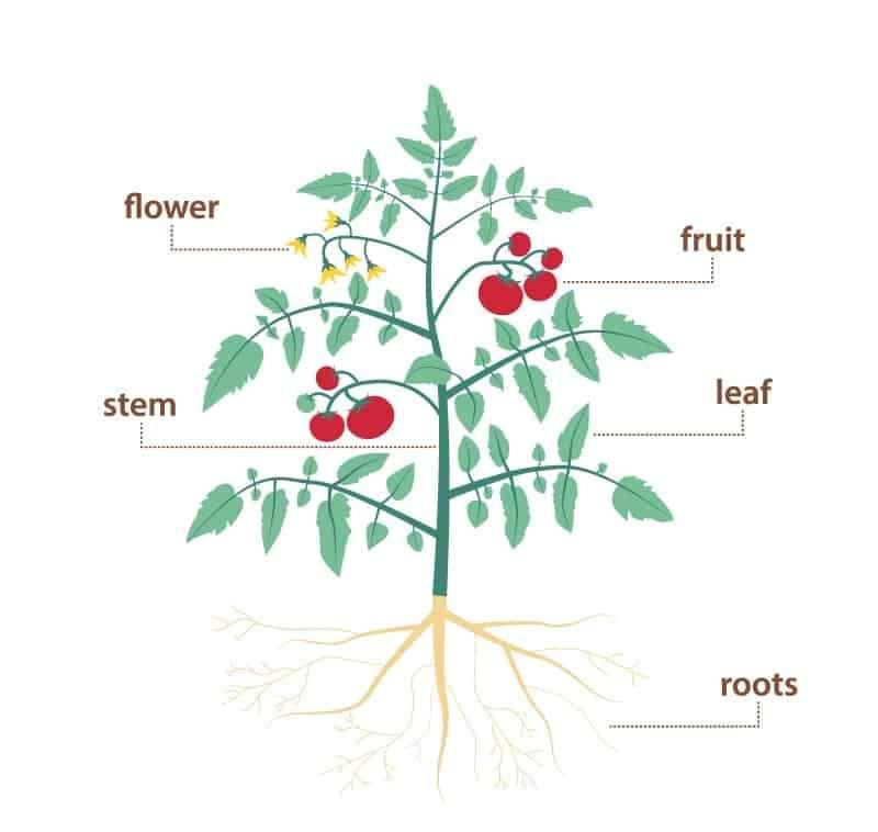 1E Parts of the plants