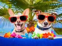 Pareja de perros en vacaciones de verano :)