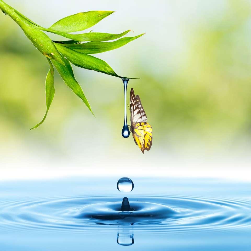 Farfalla con foglia verde